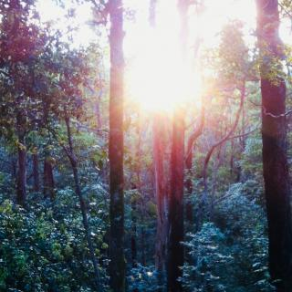 2bd Cottage with Fire & Bath in 10acres of Forest 142 Citrus Rd, Landers Shoot QLD 4555, Australia