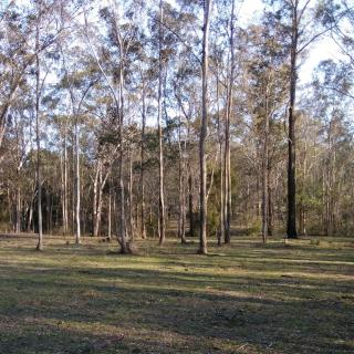 Shingle Gully